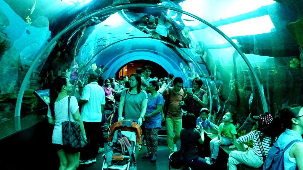 adventure-aquarium